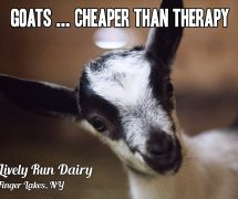 Goat Therapy Fridge Magnet