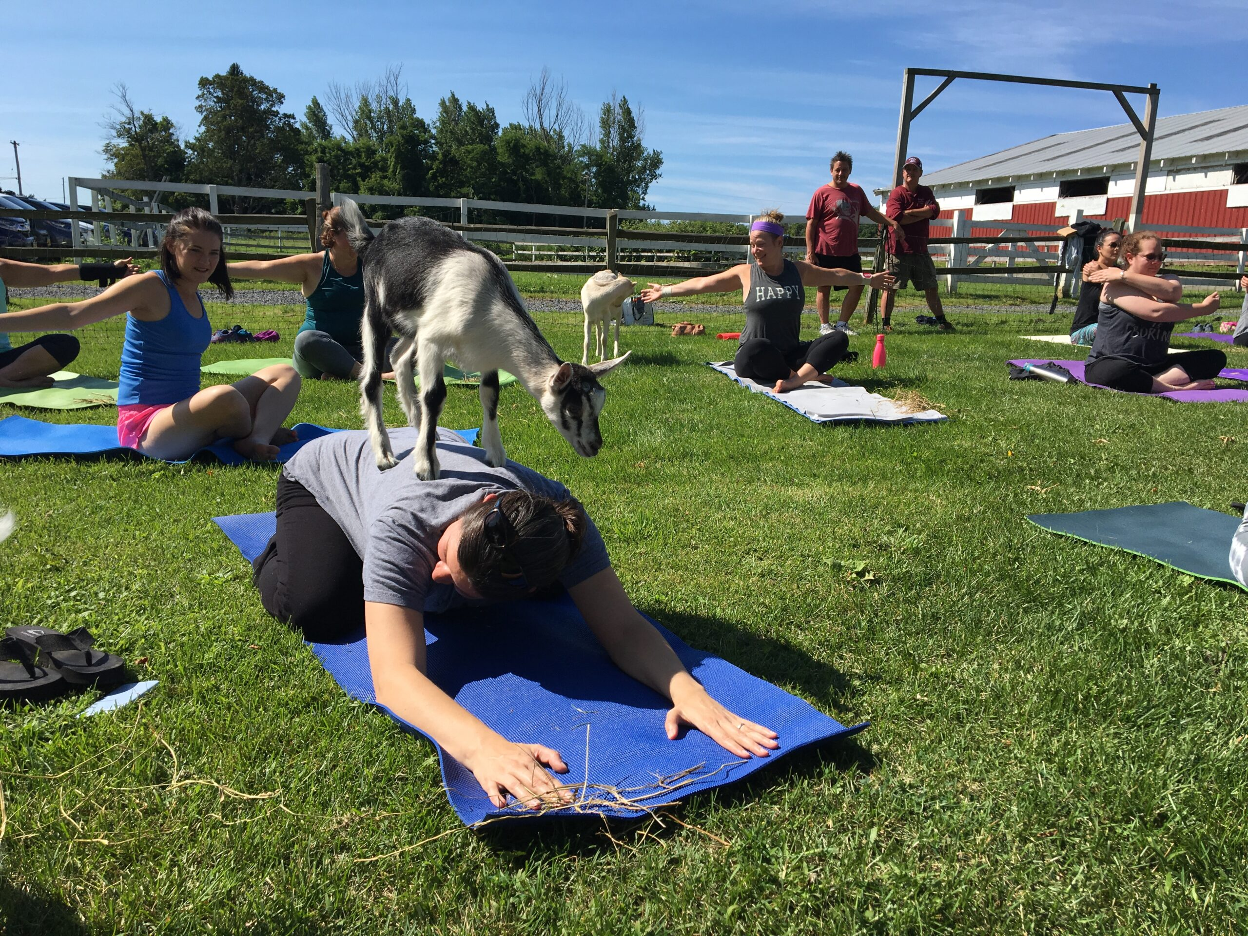 May 22 /29 Goat Yoga Ticket